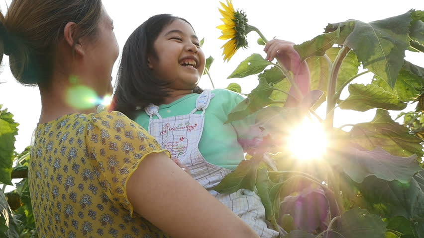 A cute Asian girl kissing sunflower in an open field with mother, Slow motion shot