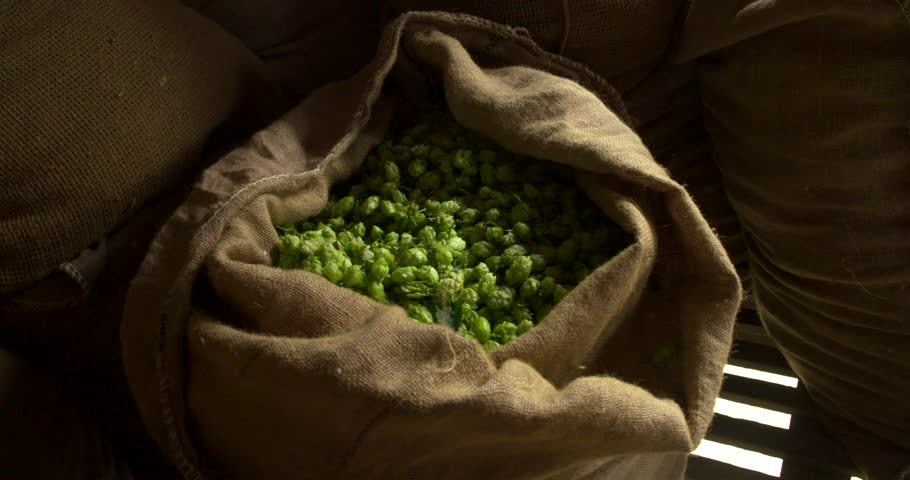 A pan around a traditional hessian sack containing freshly harvested hops.