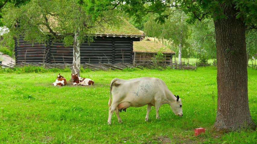 animal husbandry livestock breeding, norwagian village, green grass rooftop, norway