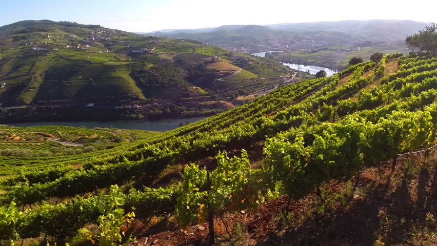 Aerial views of vineyards in Douro, Portugal