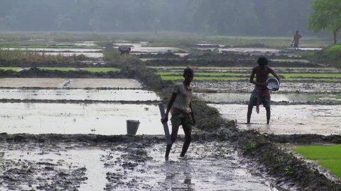 Baruipur, India - CIRCA 2013 - Two men preparing rice fields in India