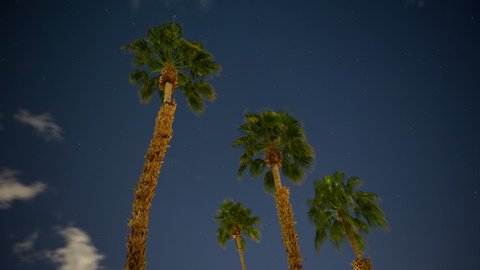 4K time lapse of four palm trees isolated in the sky on a partly cloudy night with stars and moon light from a low angle view in Palm Springs, California