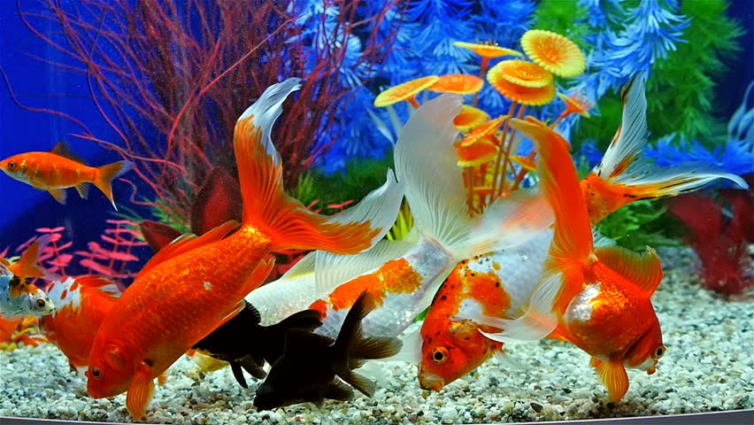 Fish not eating food in aquarium all the best fish in 2017 for Fish not eating