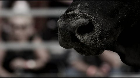 Black Bull Drooling