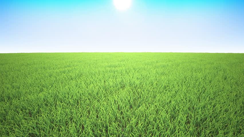 grass background. flight over grass field sunset dusk hd stock footage clip background s