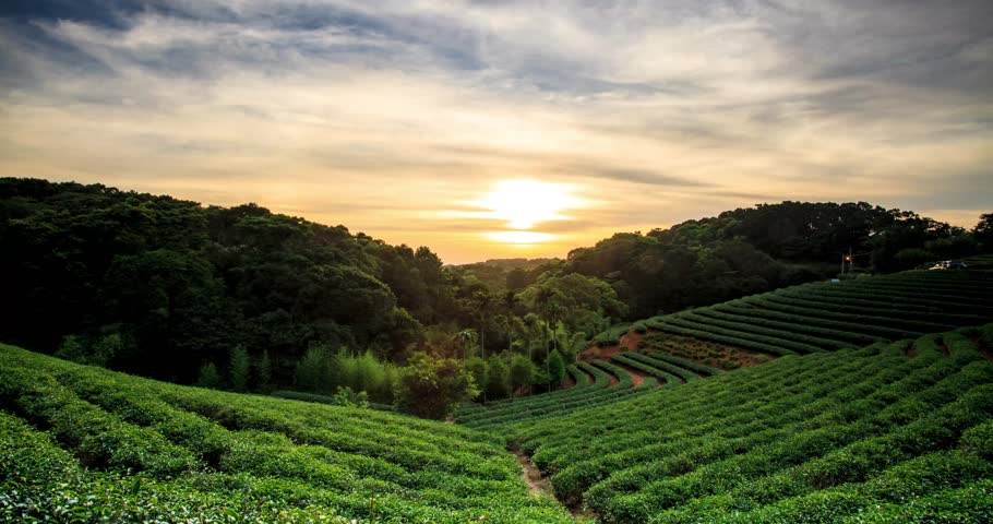 Time lapse of tea garden sunset with nice background