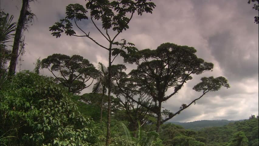 Monte Verde Cloud Forest Jungle Canopy, Costa Rica Stock Footage ...