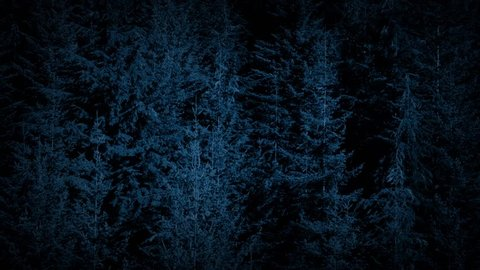 Flight Over Large Forest Trees At Night