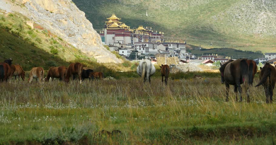 4k horse grazing in the meander river,clouds mass rolling over mountains,temple on the foot of hill. gh2_10152_4k