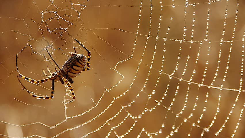 spider silk and water #1491694