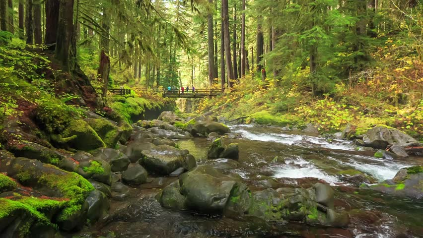 Cinemagraph Loop - Olympic National Park in Washington state, USA - motion photo