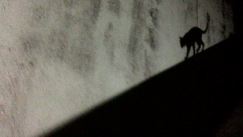 Cats shadow silhouette moving across a wall