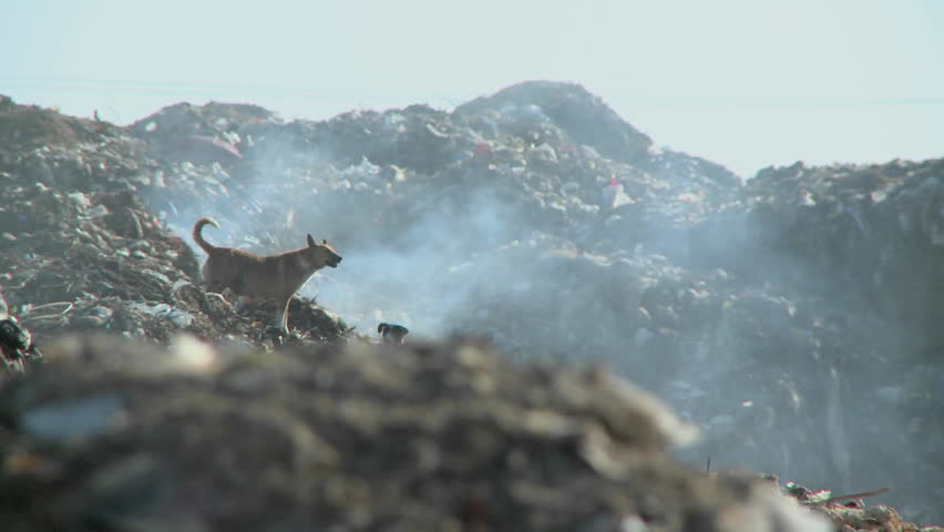 A couple of dogs walk on piles of smoldering rubbish.