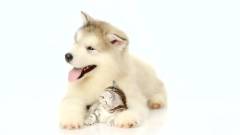 Puppy embracing tiny kitten on white background