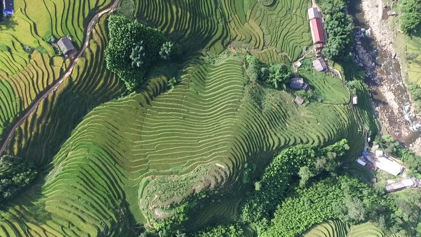 Aerial Video In An Amazing Landscape With Drone Above Rice Terraces A Beautiful Day Stock Footage 15050035