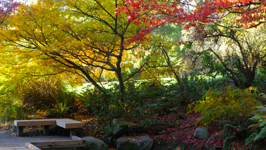 Video Bench Part - 37: Cozy Bench In Autumn Park. Golden Trees. Autumn Colors. Beautiful Trees  Covered With