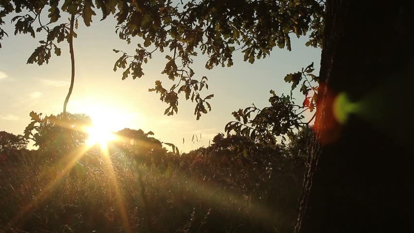 Peaceful Meadow Sunset With Old Oak Tree | Shutterstock HD Video #15197815