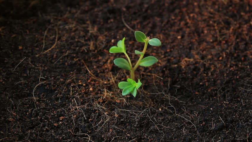 seedling growth, planting tree #15275425