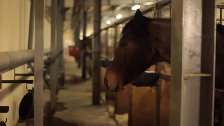 Horses is staying in the stable | Shutterstock HD Video #15325591