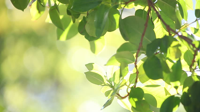 backlit green leaves with bokeh and copy space