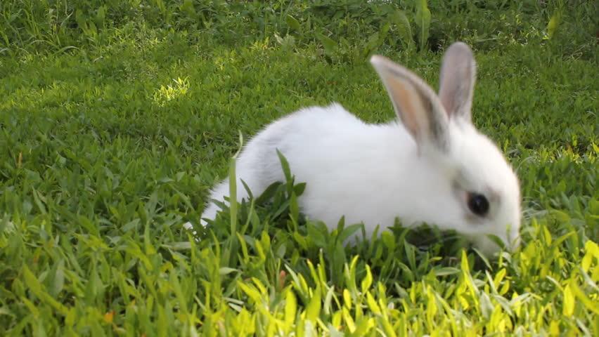 bunny rabbit sniffing around - photo #42