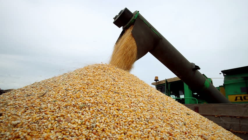 Combine harvester unloaded corn grains in truck | Shutterstock HD Video #15588997