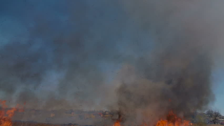 Nearly an every summer fields burn. Fire spreads quickly, burning all on the way.  | Shutterstock HD Video #15739645