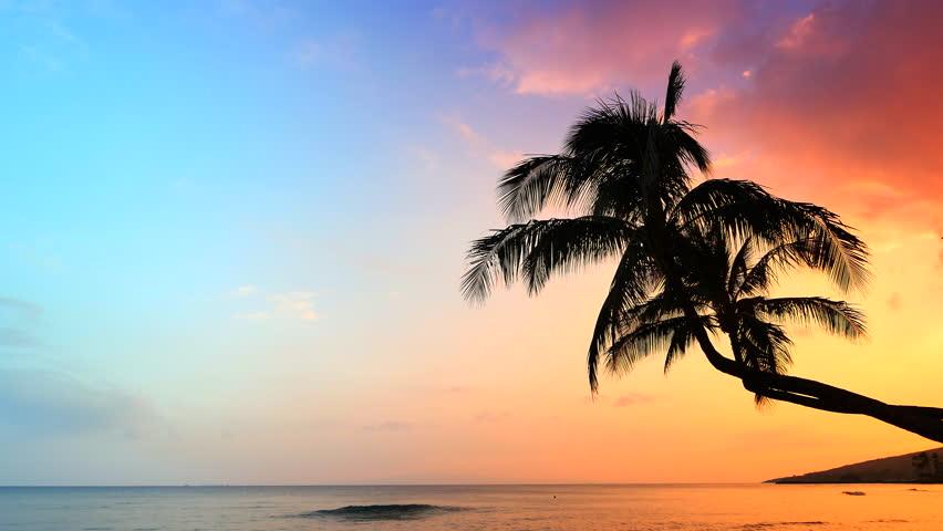 Shore Palms Tropical Beach 4k Hd Desktop Wallpaper For 4k: 4K Incredible Sunset, Tropical Beach, Palm Tree Sunset