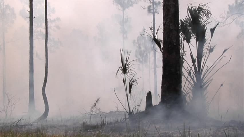 Smoke after a wildland fire in the Florida Everglades