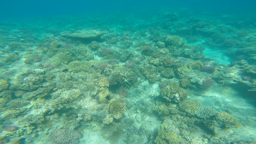 With Natural Light Through Water Surface, Moorea Lagoon, Pacific Ocean ... Pacific Ocean Water
