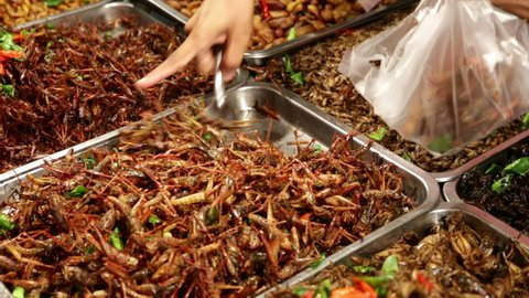 Cooked insects from metal tray at food market stand being spooned into plastic bag with other metal trays full of different types of insects