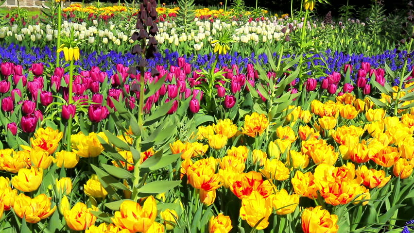 Flowers In The Park Keukenhof, The Worldu0027s Largest Flower Garden, Situated  Near Lisse,