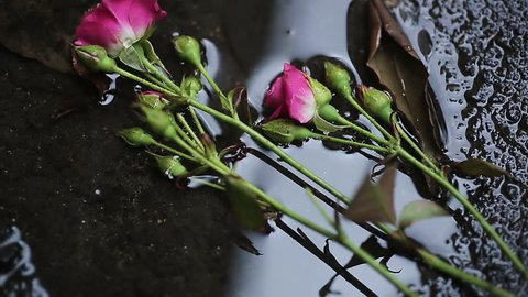 Roses falling in water on ground, victims of domestic violence, male chauvinism