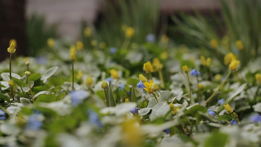 Early Spring Flowers At Dawn Stock Footage Video 100 Royalty
