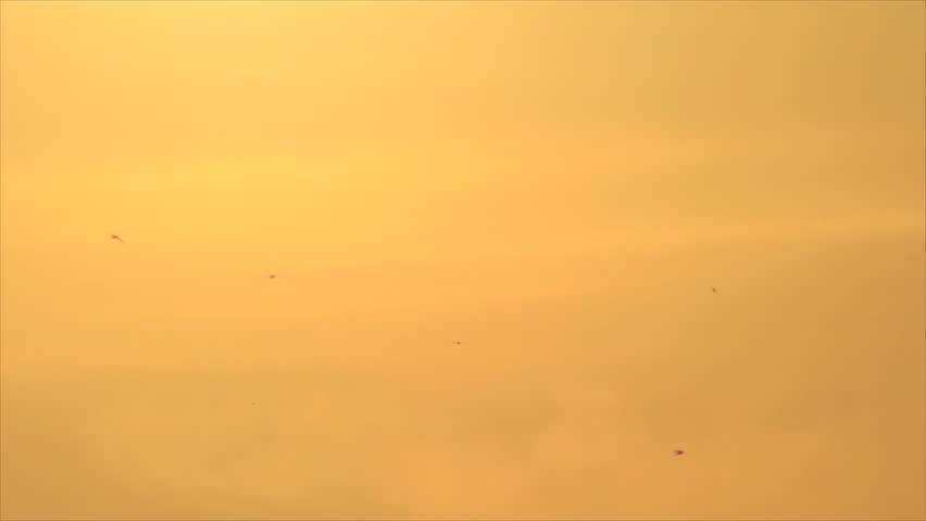 Pale Orange birds silhouettes on warm color pale orange sky stock footage