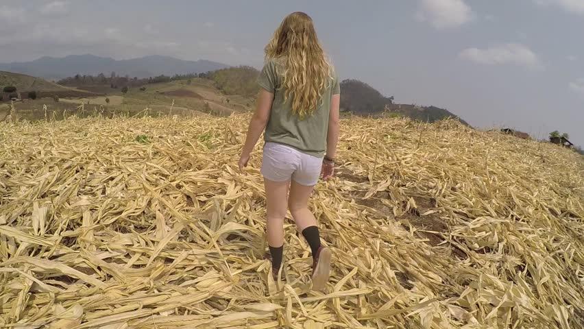 A walk through the corn fields   Shutterstock HD Video #16536325