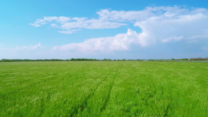 Green wheat field and cloudy sky landscape tractor in - Open field wallpaper ...