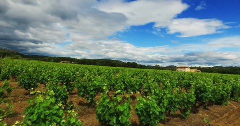 HQ Stabilized Video (Ultra HD) of a vineyard with a typical french house. Location: French Riviera, St. Tropez. Shot with a HQ 4K Cam. Pan Right movement with a cloudy sky and sun.