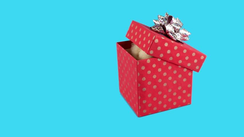 Happy Birthday Present Surprise Present Stock Footage Video 100
