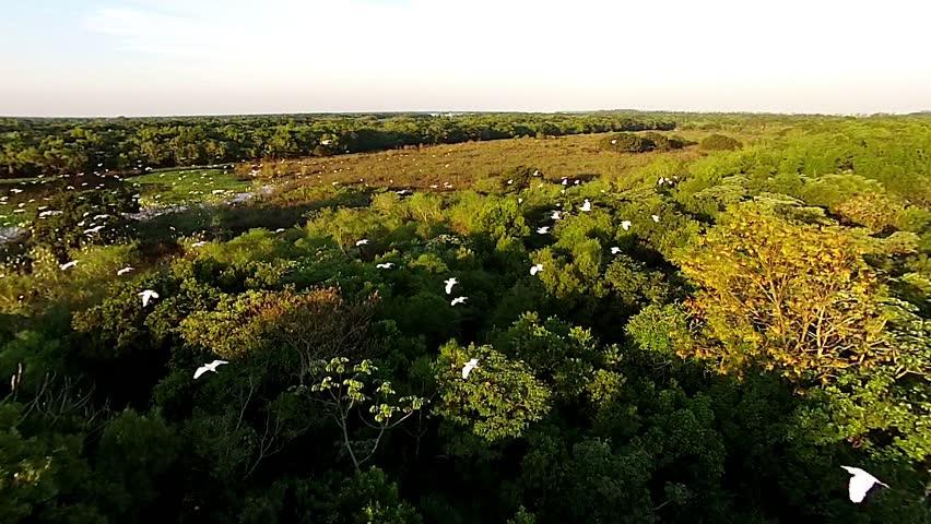 Birds flying florest drone caption