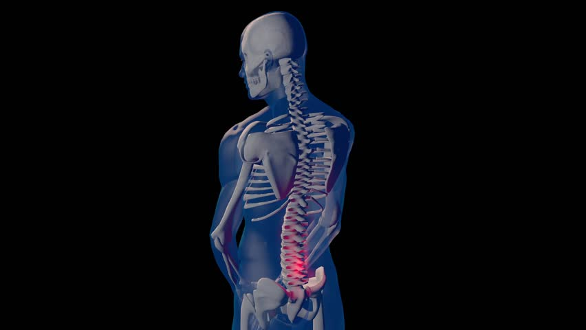 medical 3d animation of the human skeleton stock footage video, Skeleton