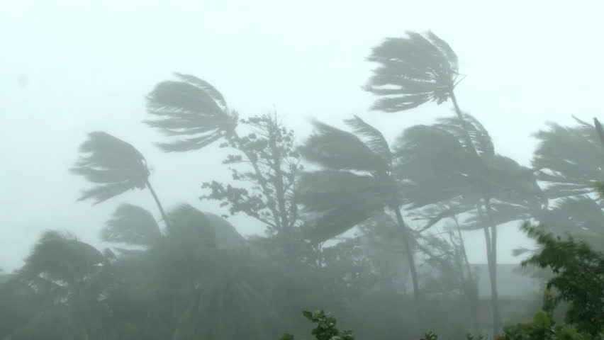 Hurricane wind blows through palm trees  | Shutterstock HD Video #16878925