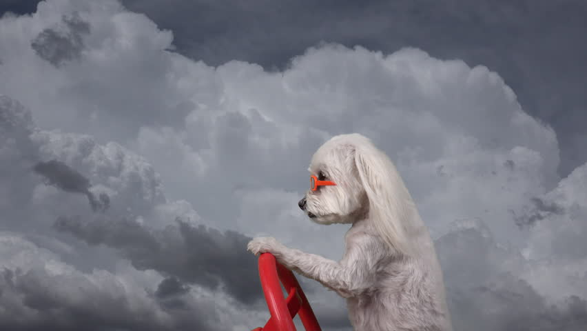 Adorable dog drives through clouds, wears sunglasses, composite, time lapse, fun concept.  4K UHD 3840x2160    Shutterstock HD Video #16901575