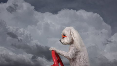 Adorable dog drives through clouds, wears sunglasses, composite, time lapse, fun concept.  4K UHD 3840x2160