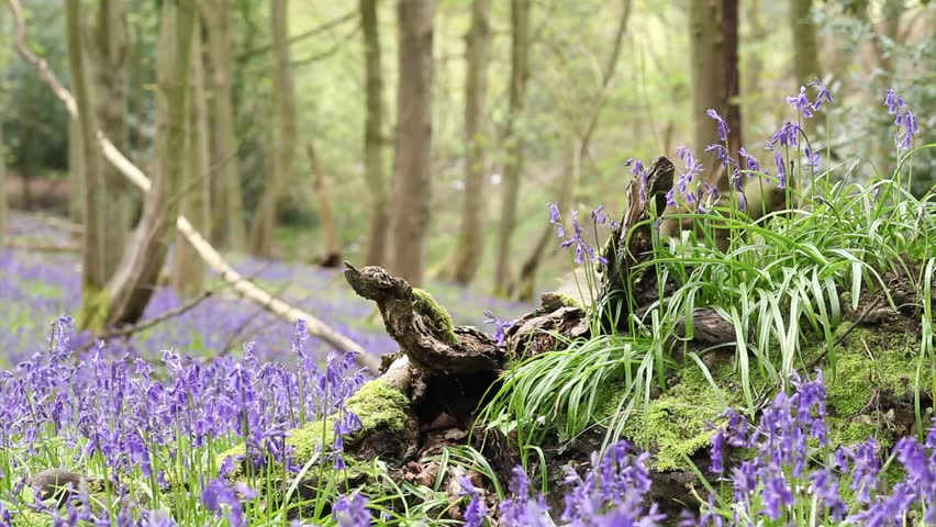The Mystery of Flowers and Plants  Witchcraft  Pagan