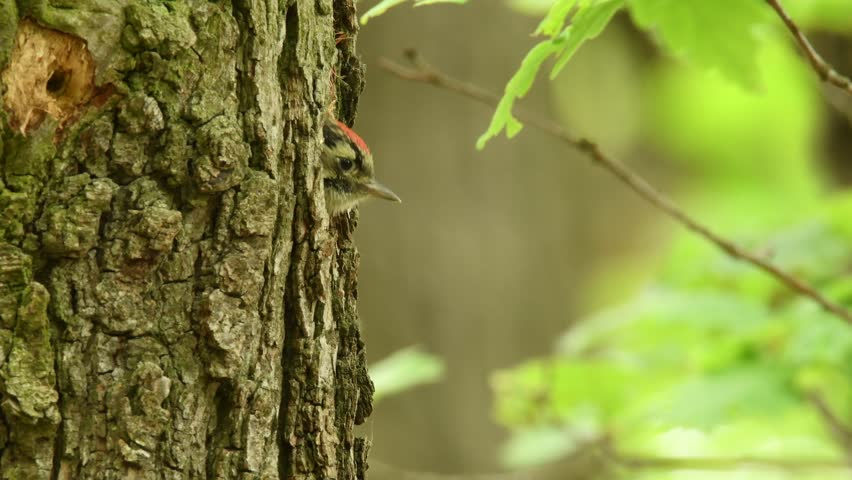 evergreen tree bark background - photo #13