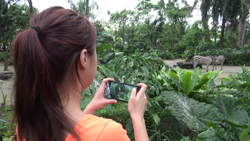 4K, Asian girl taking photograph with camera phone of common zebra in the zoo -Dan