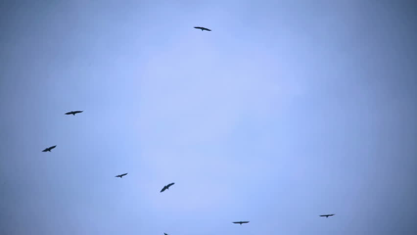 Vultures circling in an overcast sky