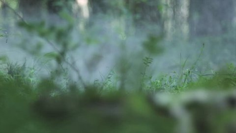 Close up of girl bare feet walking on a green grass in the forest