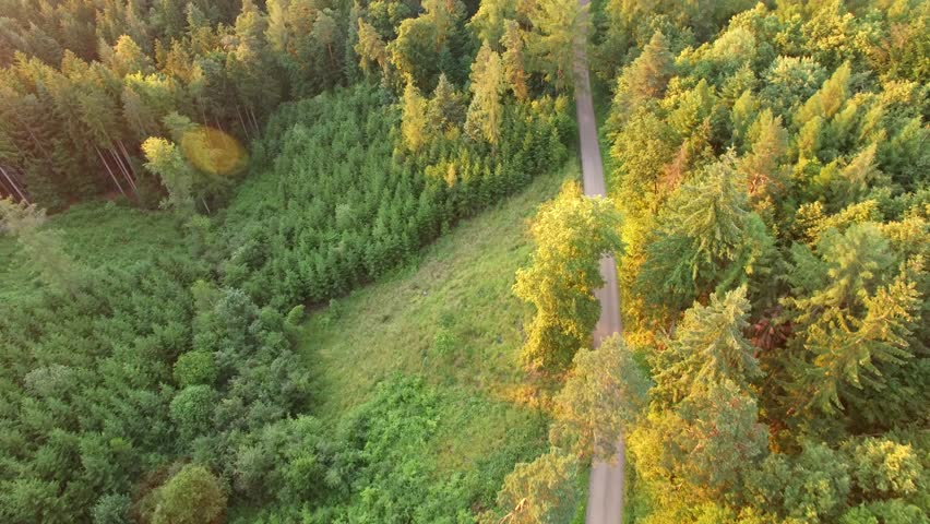 Aerial shot of footpath through forest